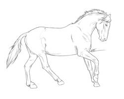 Stallion running