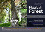 Stock package Forest Belgium 1 by secretdartiste-stock