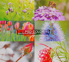 PSD Color 10 by panna-acida