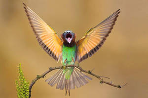 Bird-Lemur combo