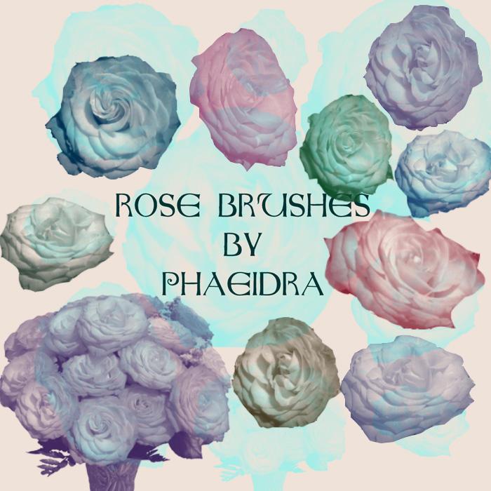 Rose Brushes by phaeidra