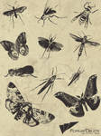 Bugs Vector Pack