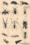 Beetle Vector Pack