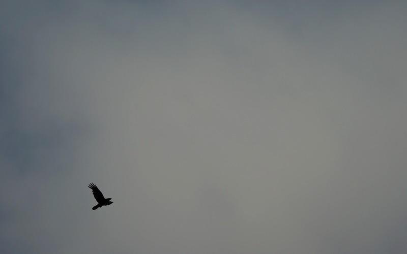 raven by gremlinner