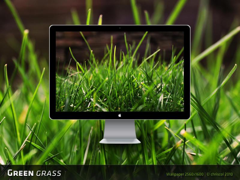 Green Grass Wallpaper by chriscol