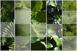 High res plants textures