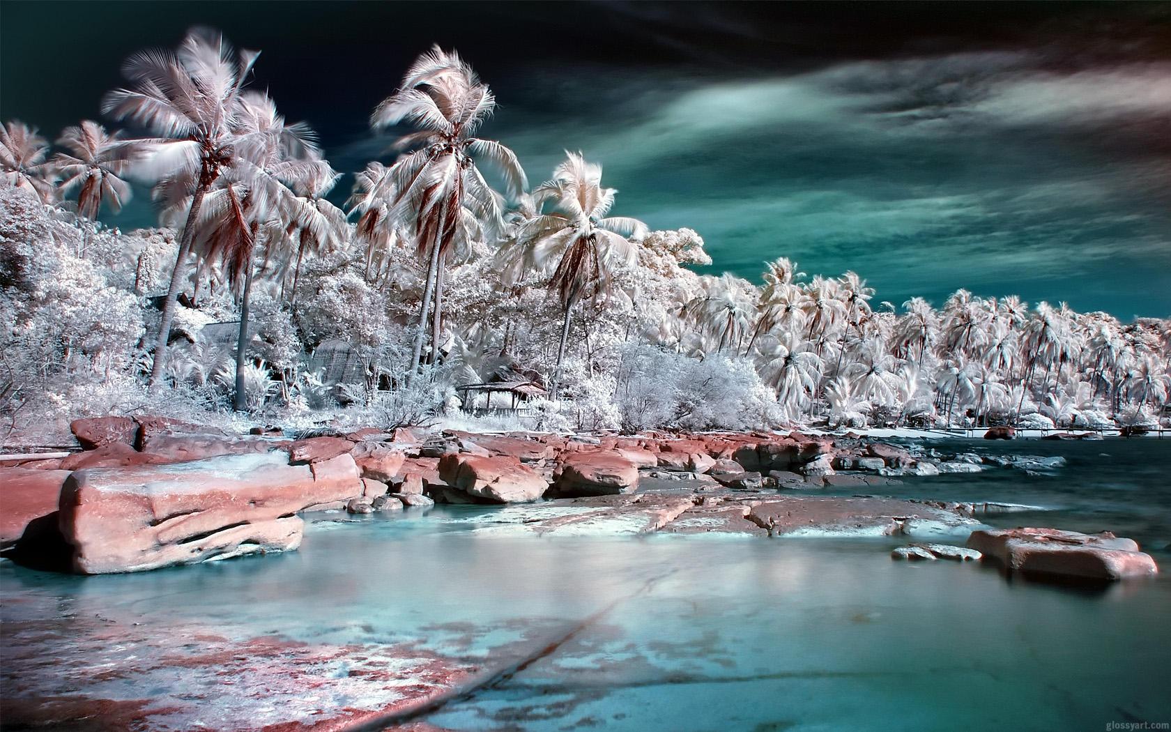 Palm Colony by nxxos