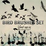 Bird brushes set