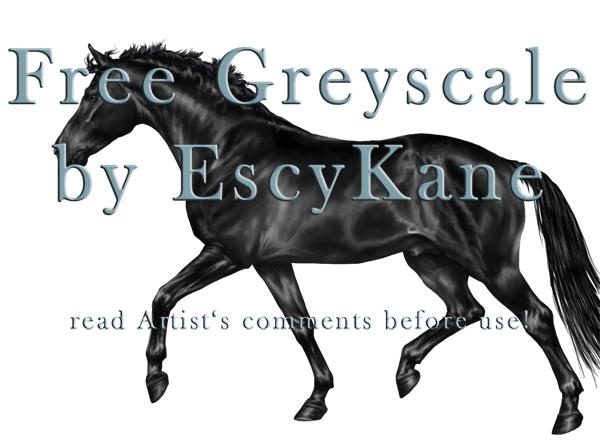 Free Greyscale Horse Trot by EscyKane