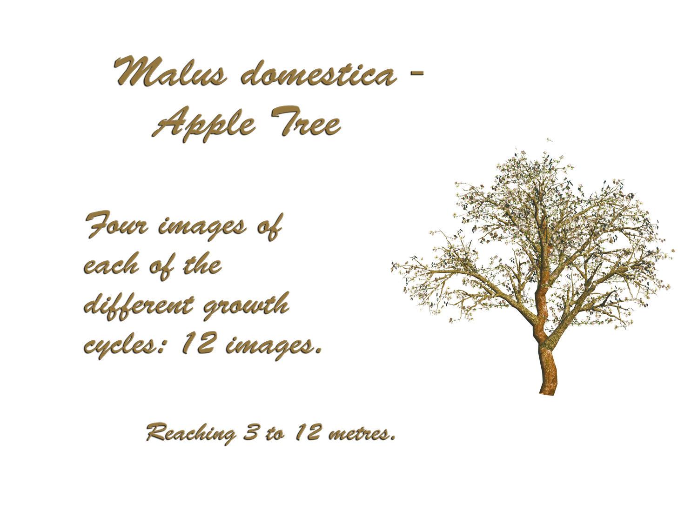 Apple Tree PSD by GraceAndPeace