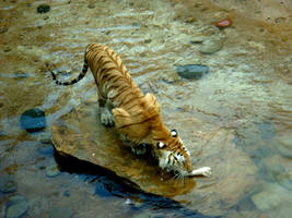 Tiger Stock by Xaomi