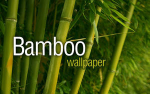 Bamboo Shoots by elukka
