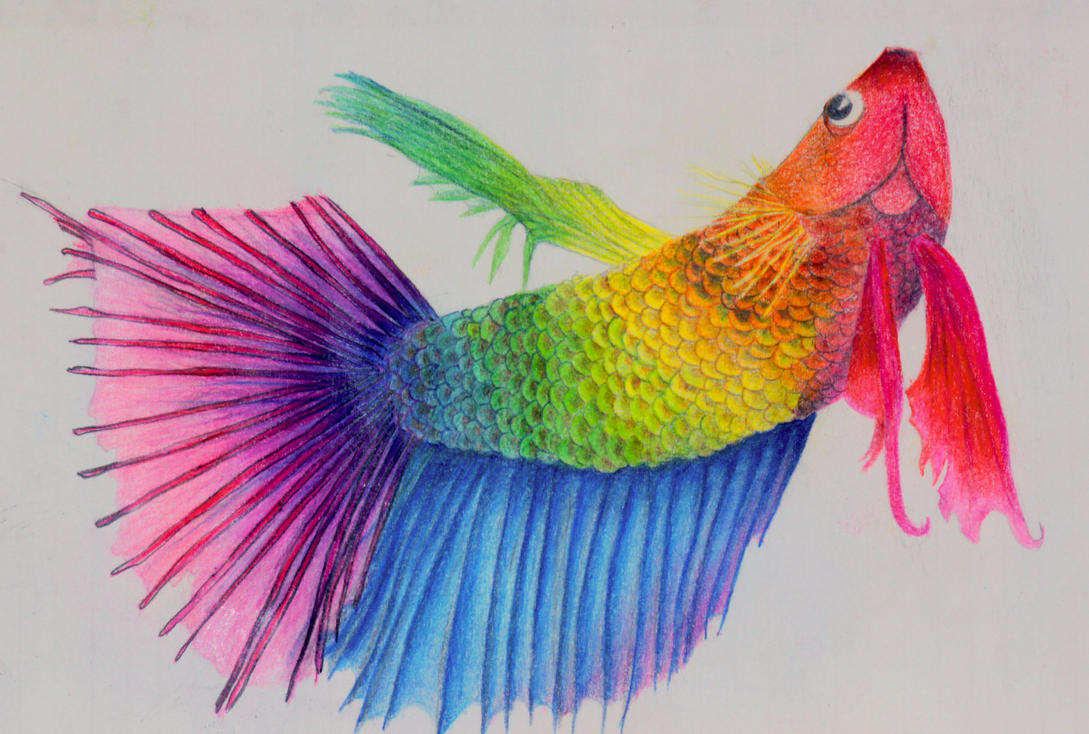 Rainbow Fish by African-Amber