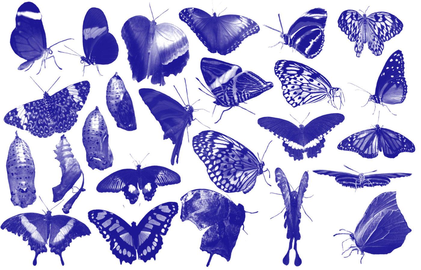 25 butterfly Photoshop brush by aswad-hajja
