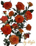 14 Roses Stock