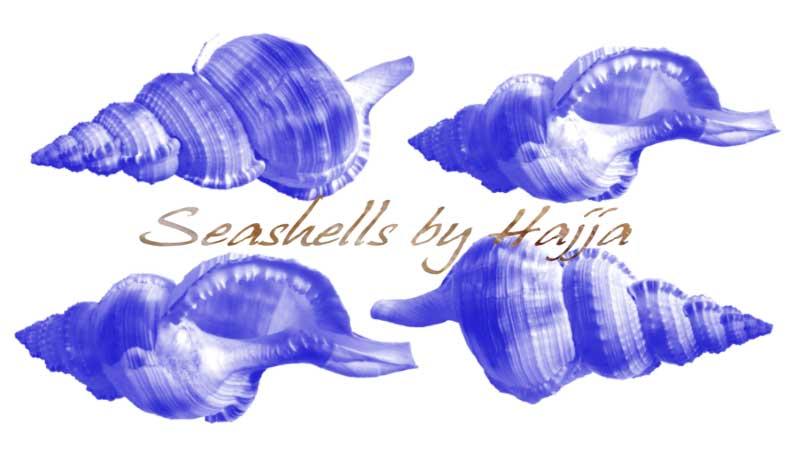 Seashell Photoshop-brushes