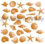 shell-brushes