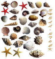 31 shells - stock by aswad-hajja