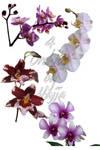 4 orchids
