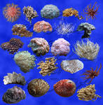 22 corals + shells stock
