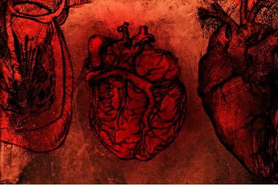 Photoshop Heart Anatomy brushes by v-grfx