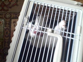 Jim in the Crate