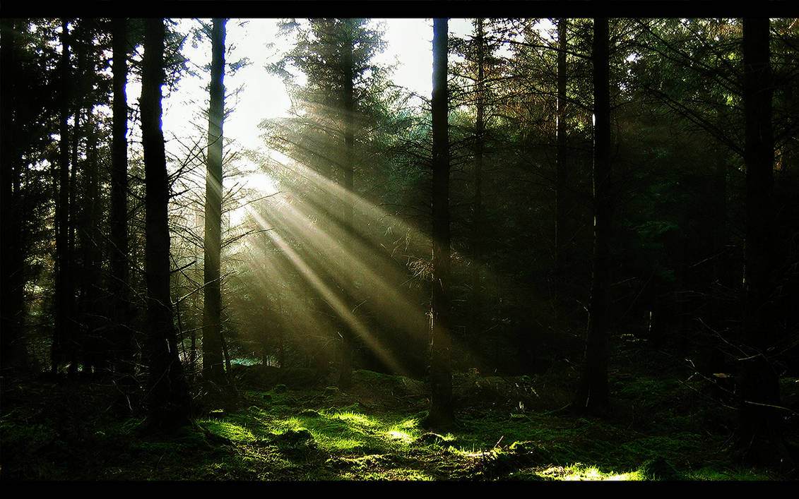 Like The Sun Through The Trees
