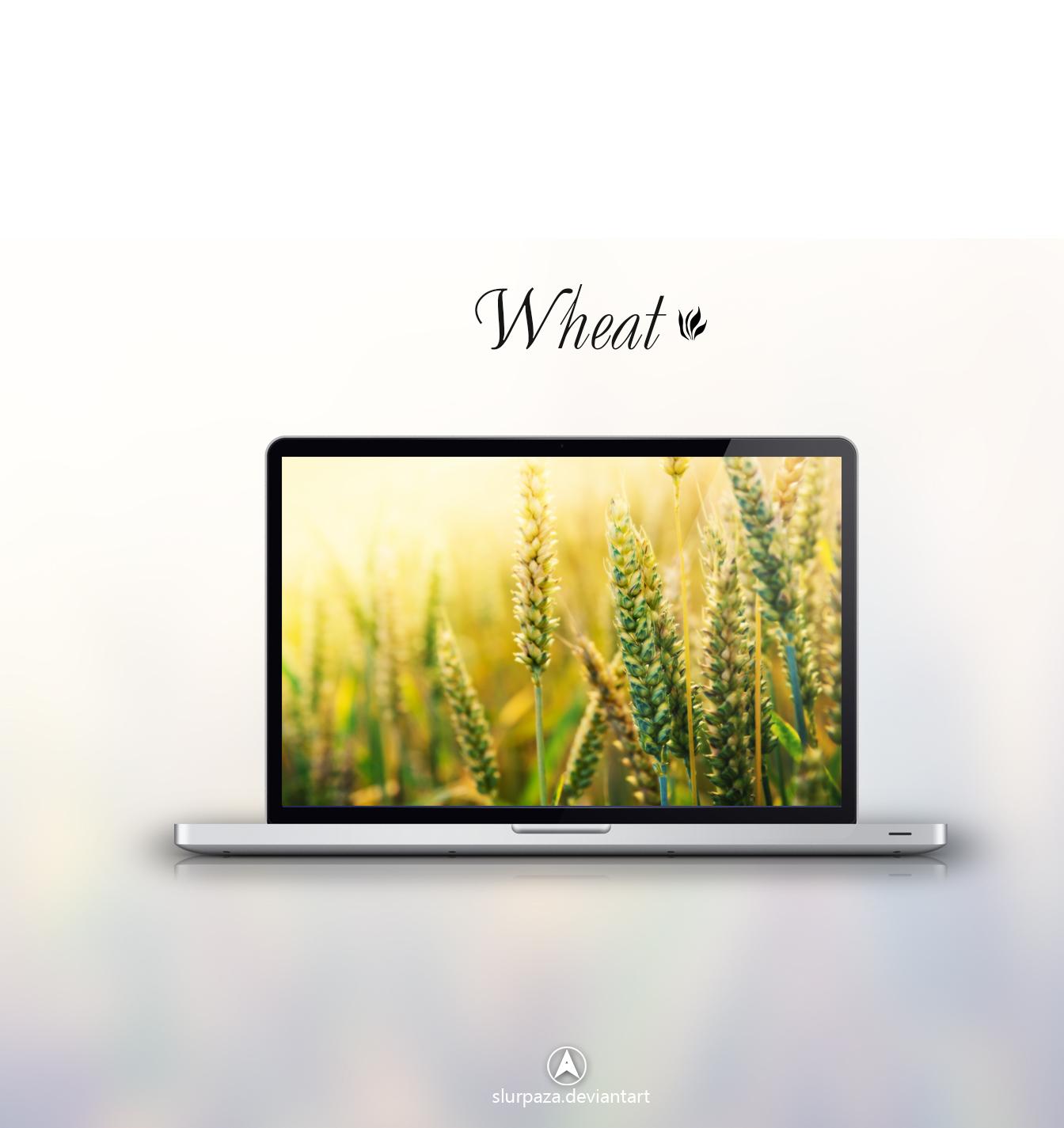 Wheat by Slurpaza