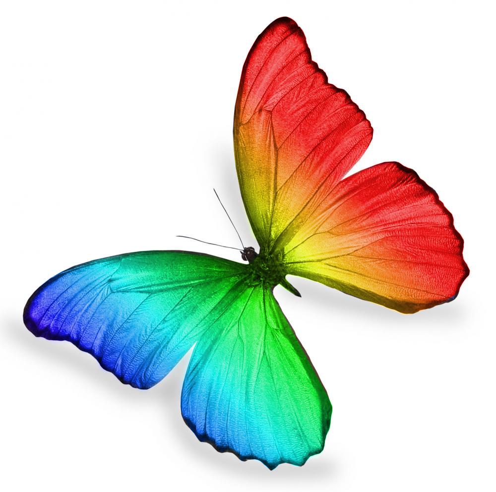 Rainbow Butterfly by ImpureElegance on DeviantArt
