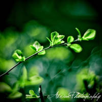 Fade to Green by adrianbilescu