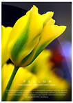 ...Yellow wallpaper pack...