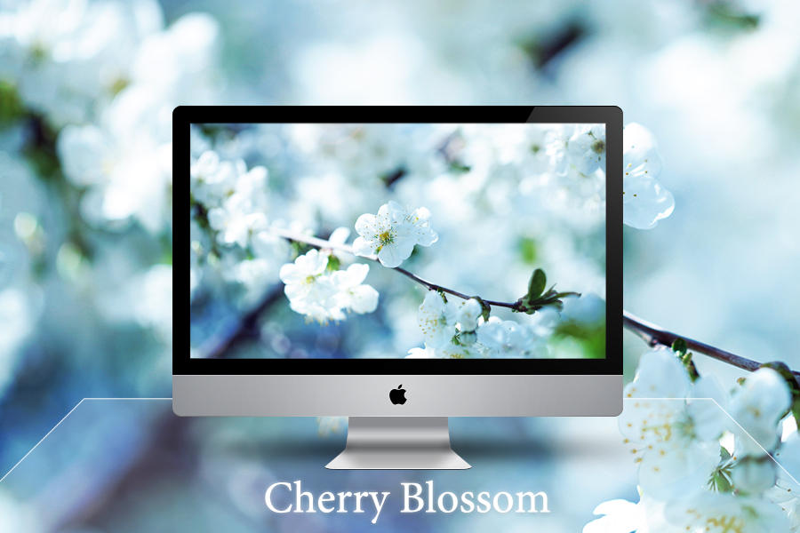 cherry blossom by Zim2687