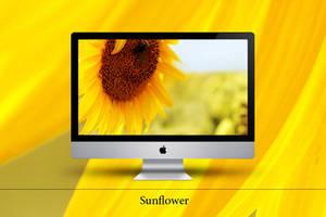 Sunflower by Zim2687