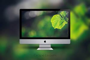 Grape Leaves by Zim2687