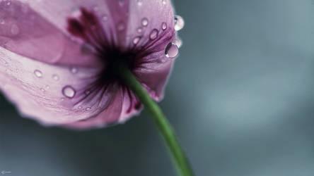 Poppy by Zim2687
