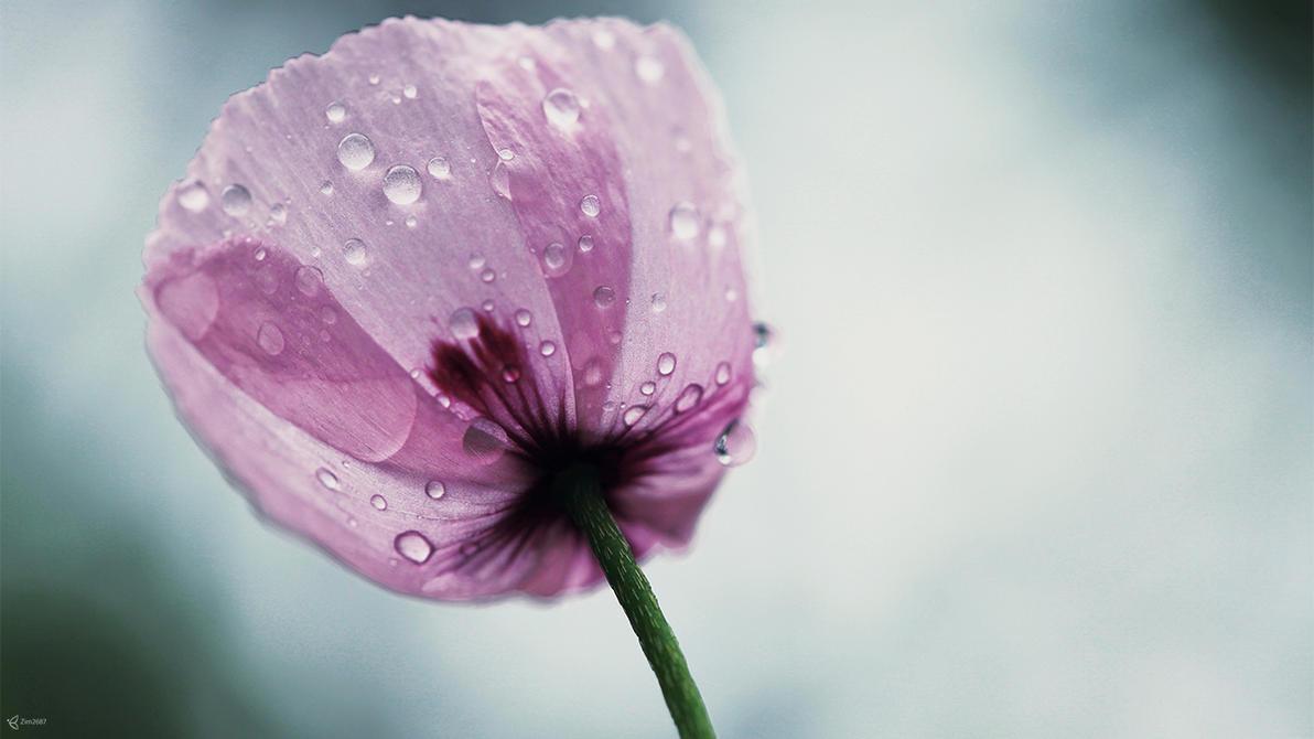 Poppy 2 by Zim2687