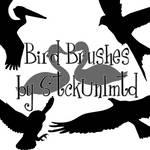 Brushes 002