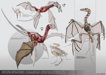 Four-winged dragon anatomy study by Quentinvcastel