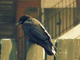 Bird on Fence 3 by MonkeyMan504
