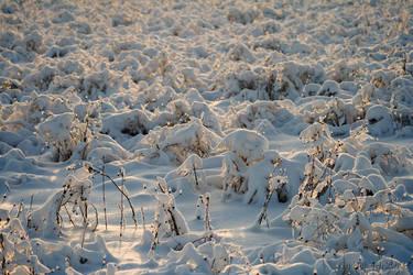 Snowy field by JyriH