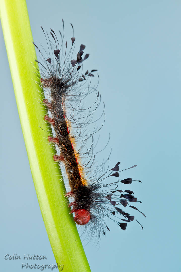 Caterpillar by ColinHuttonPhoto