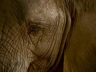 Elephant by LadyDuvet