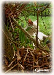 My Own Cat by Huzznie