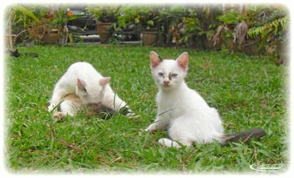 My Own Cat 2 by Huzznie