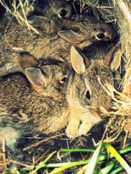 Spring Bunnies II by Cat34215