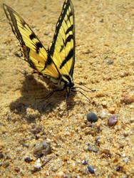 butterfly III by Cat34215