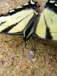 butterfly V by Cat34215
