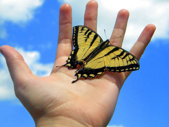 butterfly VI by Cat34215