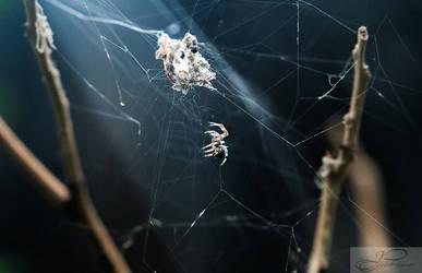Dainty Spider by deviouselite