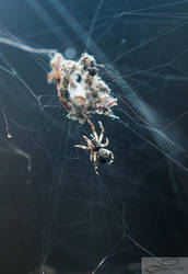 Spider Going Home by deviouselite